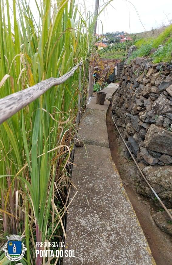 Mondas e limpezas das veredas e levadas no sítio do Monte - Ponta do Sol